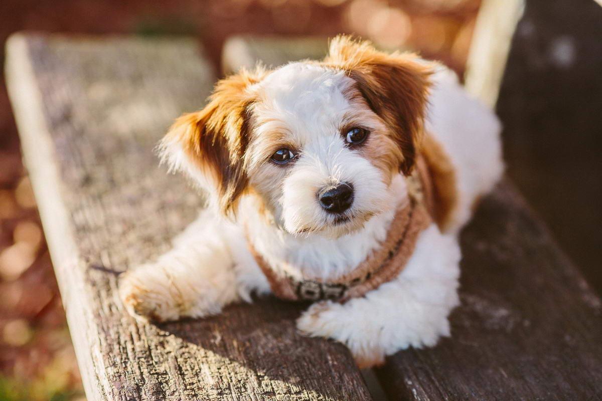 Hunde Fotograf