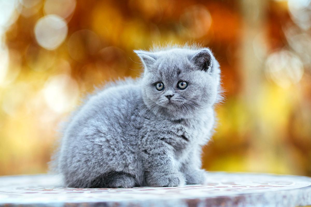 Bkh Kitty
